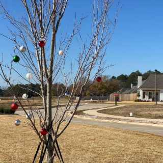 Some elves have been decorating the trees on Old Grove Circle! How very merry!