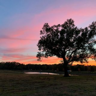 What an amazing sunset view we have at The Grove! #shreveport #shreveportla #shreveportsunset #sunset